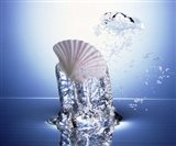 White scallop shell being raised on pillar of bubbling water