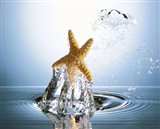 Starfish rising on water bubble toward bright light