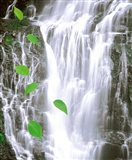 Green leaves cascading in front of waterfall