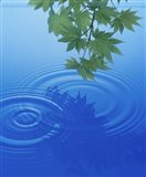 Branch with green leaves suspended over deep blue water with rings and reflection