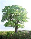 Single green tree standing in field with blue sky