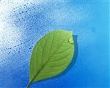 Green leaf floating above streaked water drops