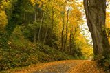 Road passing through a forest in autumn, Washington State, USA