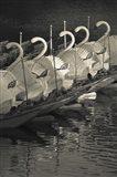 Swan boats in a river, Boston Public Garden, Boston, Massachusetts, USA