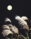 Close Up View of Foxtail Grass with Full Moon in Background