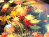 Maple Leaves, Blurred Motion
