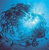Fishes swarm underwater