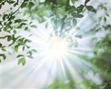 Sun Shining Through Leaves, Lens Flare