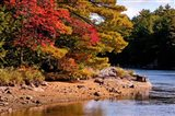 Autumn Trees, Musquash River, Muskoka, Ontario, Canada - your walls, your style!