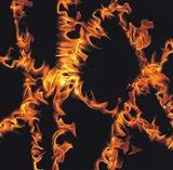 Multiple Flames