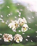 Flower petals floating in air