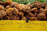 Natural sponges for sale in a market, Lourmarin, Vaucluse, Provence-Alpes-Cote d'Azur, France