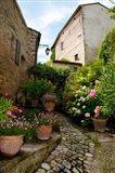 Flowers pots on street, Lacoste, Vaucluse, Provence-Alpes-Cote d'Azur, France