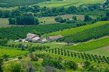 Farmhouse in a field, Lacoste, Vaucluse, Provence-Alpes-Cote d'Azur, France