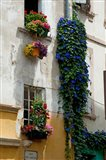 Building with flower pots on each window, Rue Des Arenes, Arles, Bouches-Du-Rhone, Provence-Alpes-Cote d'Azur, France