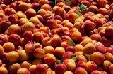 Nectarines for sale at weekly market, St.-Remy-de-Provence, Bouches-Du-Rhone, Provence-Alpes-Cote d'Azur, France