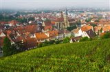 City viewed from vineyard, Esslingen-Am-Neckar, Baden-Wurttemberg, Germany