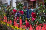 People at spring flower festival, Old Town, Dali, Yunnan Province, China