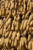 Corn cobs hanging to dry, Baisha, Lijiang, Yunnan Province, China