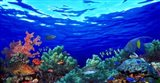 Underwater view of Pallid triggerfish, Oriental Sweetlips and Longfin bannerfish with Yellowbar Angelfish