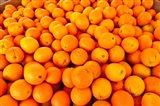 Close-up of oranges, Santa Paula, Ventura County, California, USA