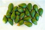 Avocados in a bunch, Santa Paula, Ventura County, California, USA