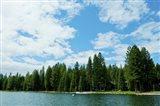 Trees along bank of Lake Almanor, California, USA