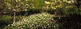 Flowers in Central Park, Manhattan, New York City