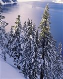 Snow Covered Trees at South Rim, Crater Lake National Park, Oregon