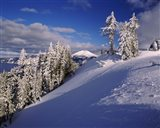 Snow covered trees in winter, Mt. Scott, Crater Lake National Park, Oregon, USA