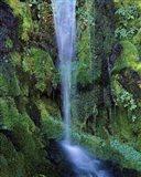 Wheeler Creek Waterfall on Dutton Ridge, Crater Lake National Park, Oregon, USA
