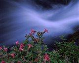 Flowers on Plants, Castle Crest Wildflower Garden Trail, Munson Creek, Crater Lake National Park, Oregon