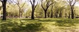 Trees and grass in a Central Park in the spring time, New York City, New York State, USA