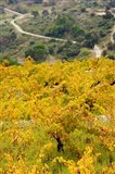 Vineyards, Collioure, Vermillion Coast, Pyrennes-Orientales, Languedoc-Roussillon, France (vertical)