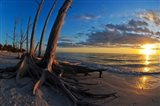 Dead Trees on the Beach at Sunset, Lovers Key State Park, Lee County, Florida