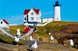 Seagulls at Nubble Lighthouse, Cape Neddick, York, Maine, USA