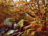 Trees with Granite Rocks at Huelgoat forest in autumn, Finistere, Brittany, France