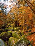 Huelgoat Forest in Autumn, Finistere, Brittany, France