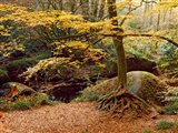 Huelgoat Forest Covered in Autumn Leaves, Finistere, Brittany, France