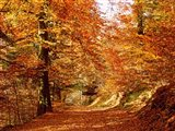 Trees at Huelgoat forest in autumn, Finistere, Brittany, France