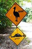 Warning sign at the roadside, Cape Tribulation, Queensland, Australia