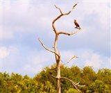 Low angle view of a Cormorant (Phalacrocorax carbo) on a tree, Boynton Beach, Florida, USA