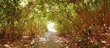 Trees on the entrance of a beach, Delray Beach, Palm Beach County, Florida, USA