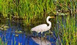 Reflection of white crane in pond, Boynton Beach, Florida, USA