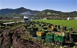 Harvesting Lettuce near Ventas de Zafarraya, Spain
