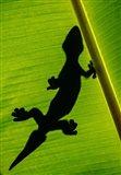 Leopard Gecko, Tortuguero, Costa Rica