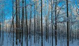 Winter Ice on Trees, New York State, USA
