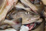 Fresh Cod, Iceland