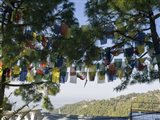 Prayer Flags, Upper Dharamsala, Himachal Pradesh, India
