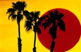 1990S 3 Silhouetted Palm Trees